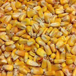 Tratament semințe